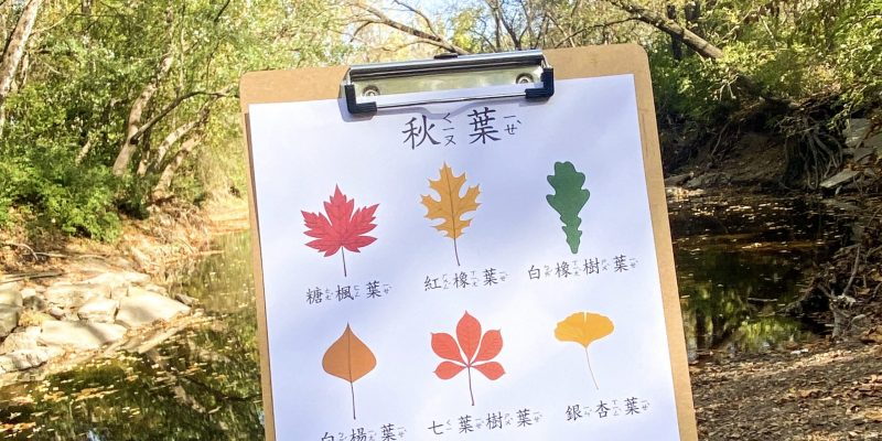 Fall Themed Chinese learning activity